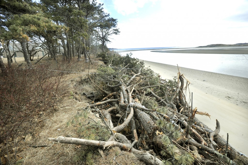 Storms have accelerated erosion and pushed the high tide mark at Popham Beach State Park in Phippsburg to within 75 feet of a new bathhouse, behind trees at left. Trees that have been lost to beach erosion are tied to the shoreline in an effort to minimize further damage.