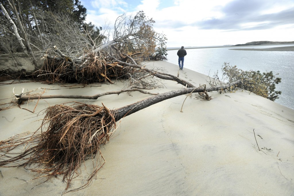 Paul Getchell takes a walk along Popham Beach, now littered with downed trees.