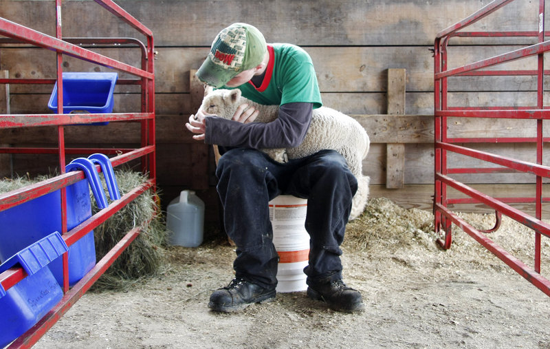 Cody Parsons of Spinnakees Farm in Augusta cares for one of his yearling Baby Doll lambs at the Maine Fiber Frolic in Windsor on Saturday.