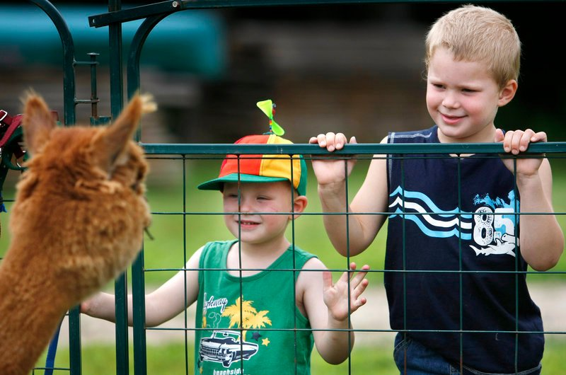Drew and J.T. Pound of Durham, ages 2 and 4, respectively, say hello to a furry friend Sunday at Upper Farm Alpacas in Pownal during the annual Open Farm Day.