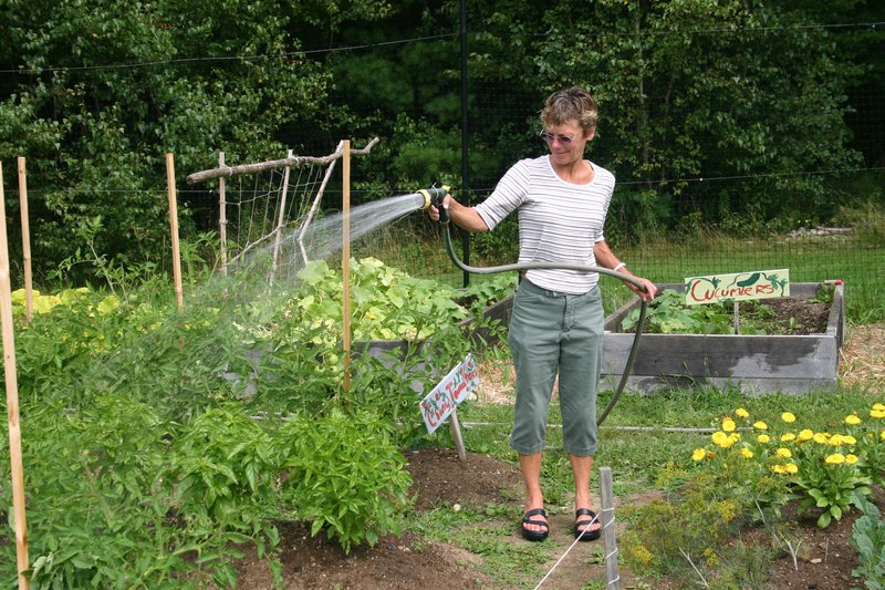 Avery Yale Kamila/Staff Writer Susan Stowell, who is the nutrition coordinator for Yarmouth Elementary School, waters basil in the school garden. The basil soon will be transformed into pesto and used on pizza.