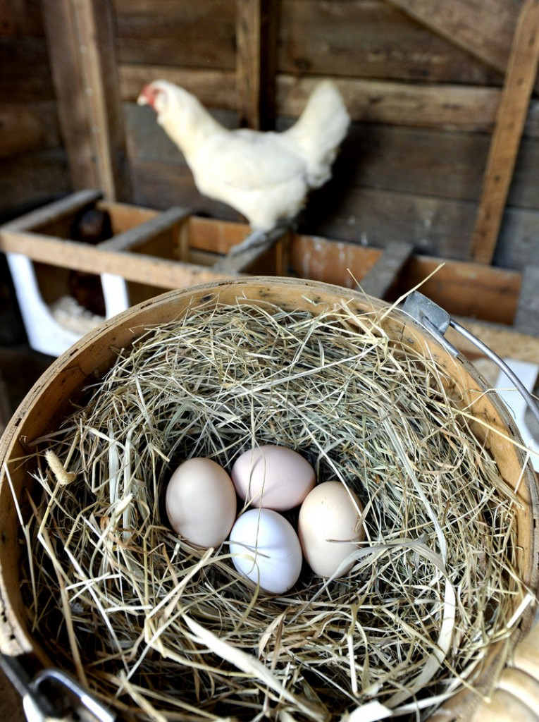 These eggs at the Christmas Farm in Buxton will be sold directly to consumers.