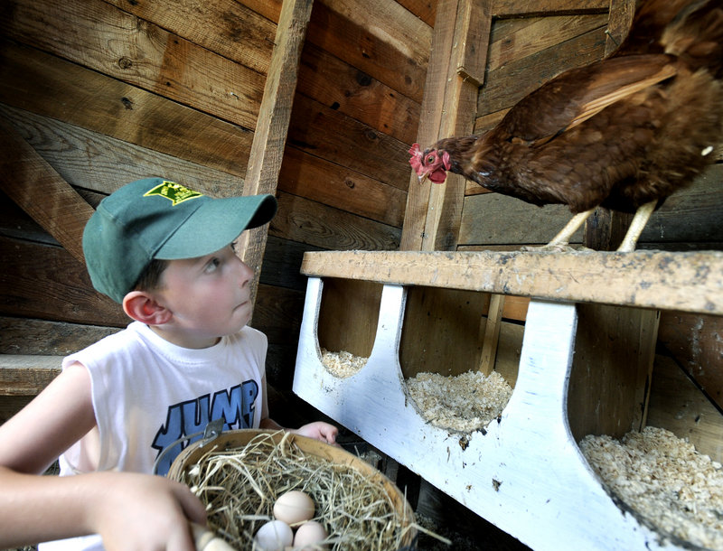 Isaac Randall, 8, collects some of the two dozen eggs produced each day at his family's Christmas Farm in Buxton. Salmonella outbreaks in the 1980s led Maine to create tough programs to guard against contamination.