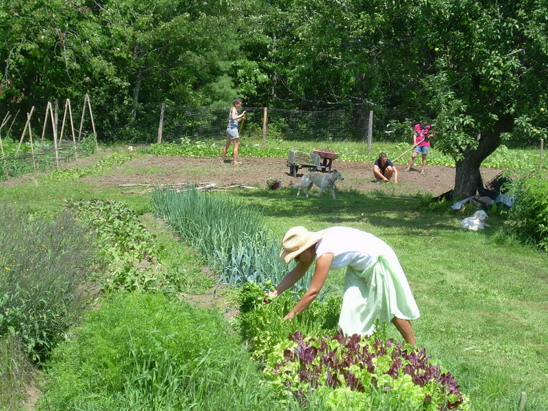 Christina Sidoti, owner of Paolina's Way in Camden, tends her Well Fed Farm in Searsmont. The farm provides much of the produce for the restaurant's menu.