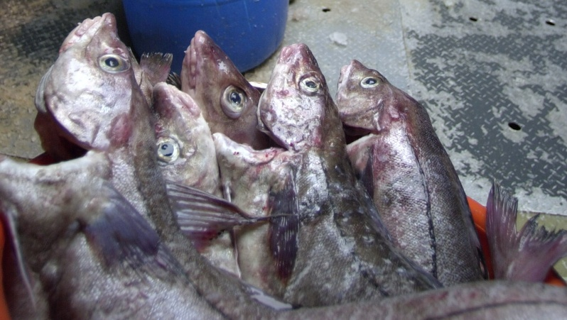 President Obama's choice of William Daley for his new chief of staff may bode well for the ground fishing industry.