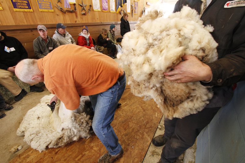 Participants in the University of Maine Cooperative Extension sheep-shearing class at North Star Sheep Farm in Windham collect fleece. Last weekend's class attracted 22 students.