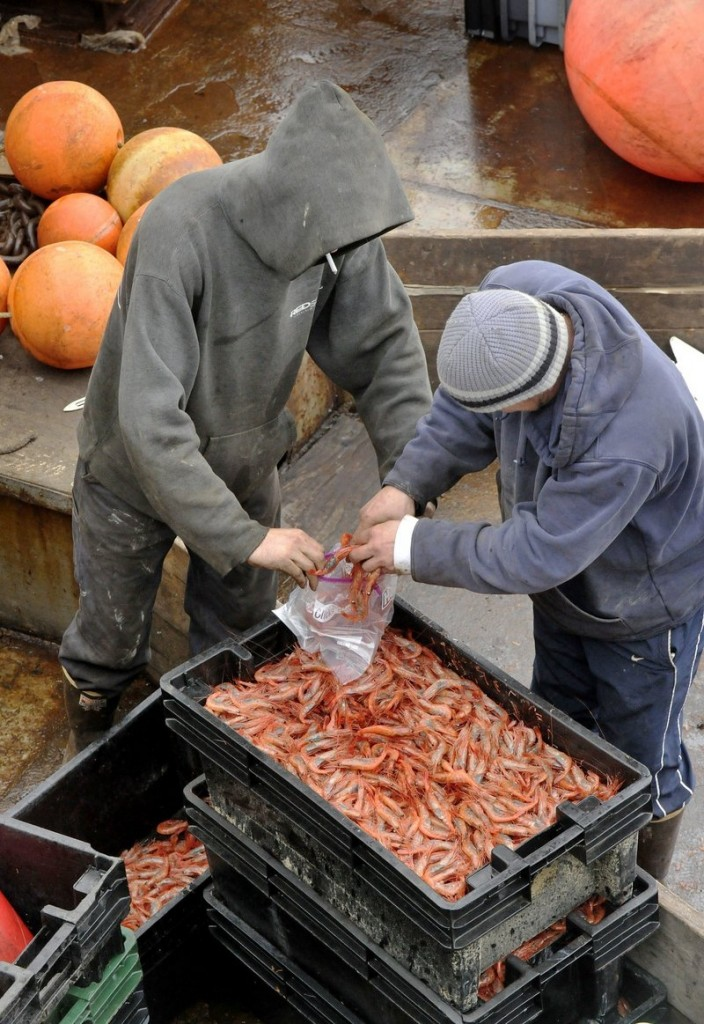 A worker, left, with the Department of Marine Resources collects a sample of shrimp caught by the crew of the fishing boat Jubilee in Portland in December.