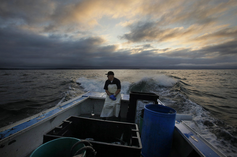 Howard Gray, 77, sits in the stern of his lobster boat while his son Charlie is at the helm. The law allows Charlie Gray, an apprentice who is on a long waiting list to get his own lobstering license, to fish on his father's boat as long as his father is aboard.