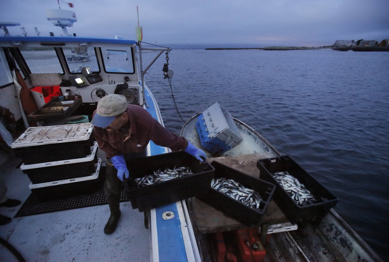 Charlie Gray hauls crates of herring aboard his father s lobster boat, which is moored in the Scarborough River off Ferry Beach in Scarborough.