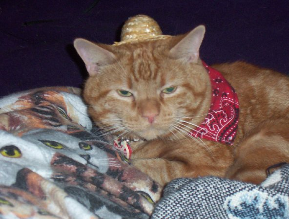 Hilda Taylor's kitty Rubin, who always wears a bandana anyway, adds a doll hat to become a tiny, furry farmer.