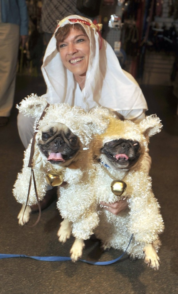 "Lori Sirois of Portland brought her two ""pugs in sheep's clothing,"" Puggy and Sissy, to a Halloween party for pets and their owners at Planet Dog last year."