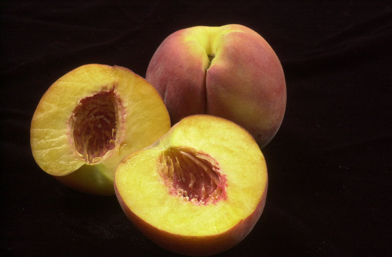 Peaches grown in Maine can be just as tasty as those from warmer climates, insists an orchardist who moved here from the South in 1978.