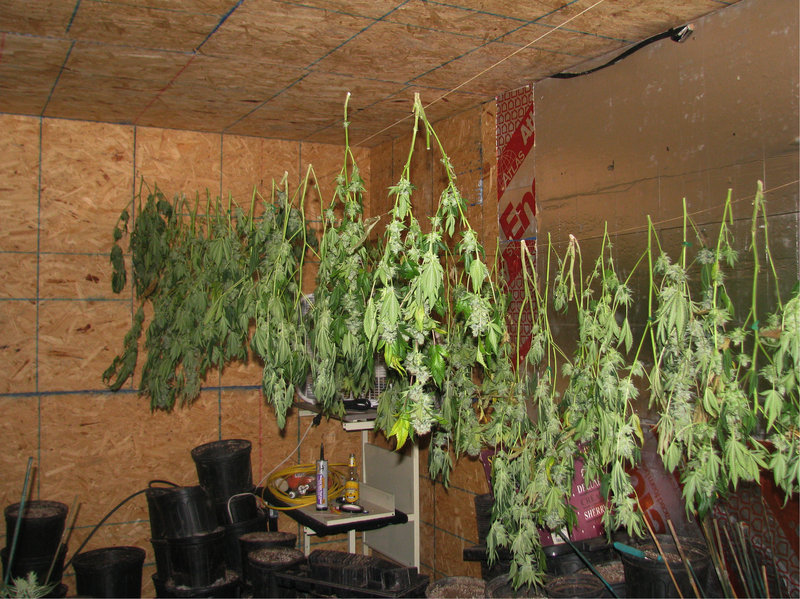 """Authorities who raided a warehouse in Waterboro said it was set up for """"continuous cultivation,"""" with 800 plants in various stages of growth throughout the building."""
