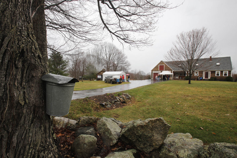 """People visit Nash Valley Farm in Windham. Maine Maple Sunday is a labor of love at the farm, said co-owner Roberta Morrill. """"They call it the maple reunion,"""" she said."""
