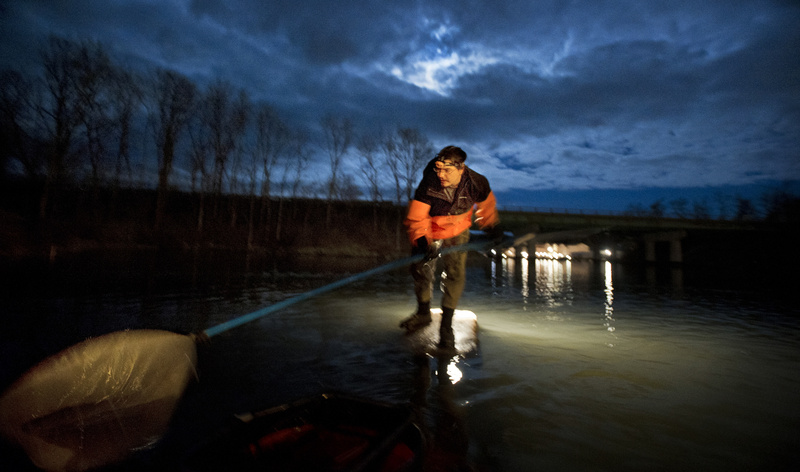 John Moore of Freeport fishes for baby eels, known as elvers, in a southern Maine river Thursday night.