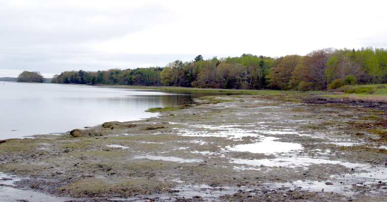 This wooded area that spreads across more than 100 acres on the shoreline of Maquoit Bay was one parcel conservationists hoped to protect when Maine's Legislature restored funding to the Land for Maine's Future program in 2005.