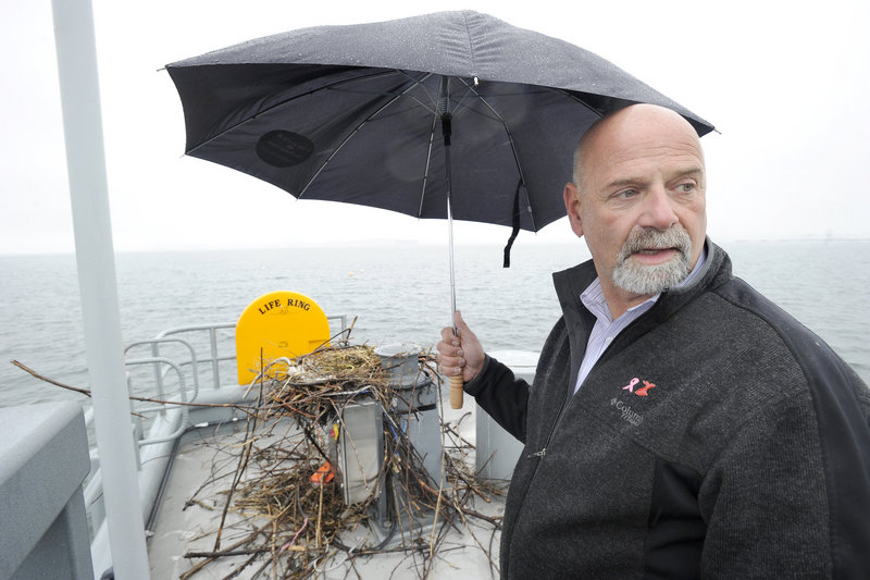 Bob Leeman, the city's port manager, inspects a half-constructed osprey nest on a mechanical capstan at the end of the pier at Ocean Gateway Pier II on Friday. Leeman said he planned to contact state wildlife officials for guidance about when and how the nest may be removed legally from the pier.