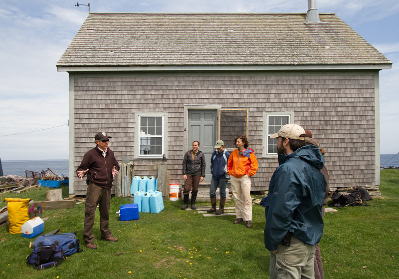 Brian Benedict, the Maine Coastal Island's deputy refuge manager, coordinates a sheep-herding effort on Metinic Island, which is located off the coast near Rockland.