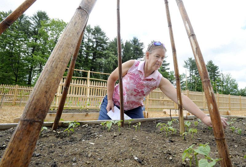 Loni Brown checks on young pole bean plants.