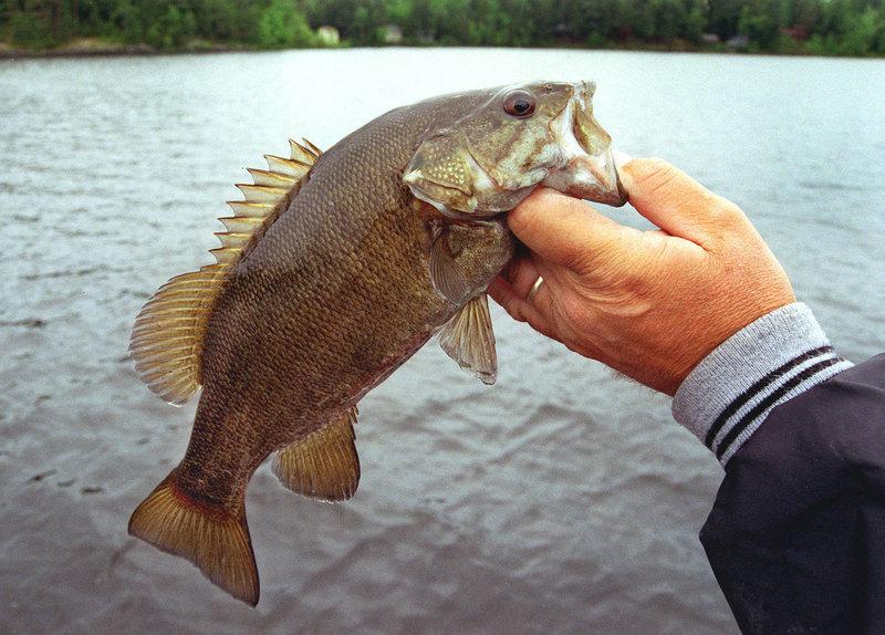 Freshwater fishing report the portland press herald for Bass fishing in the rain
