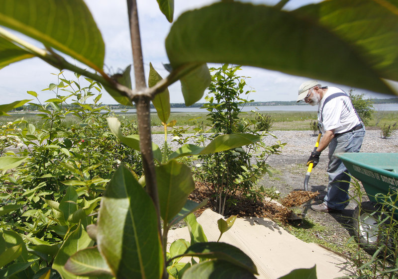 Eric Handley of Portland places mulch in a section of garden containing native Maine plants.