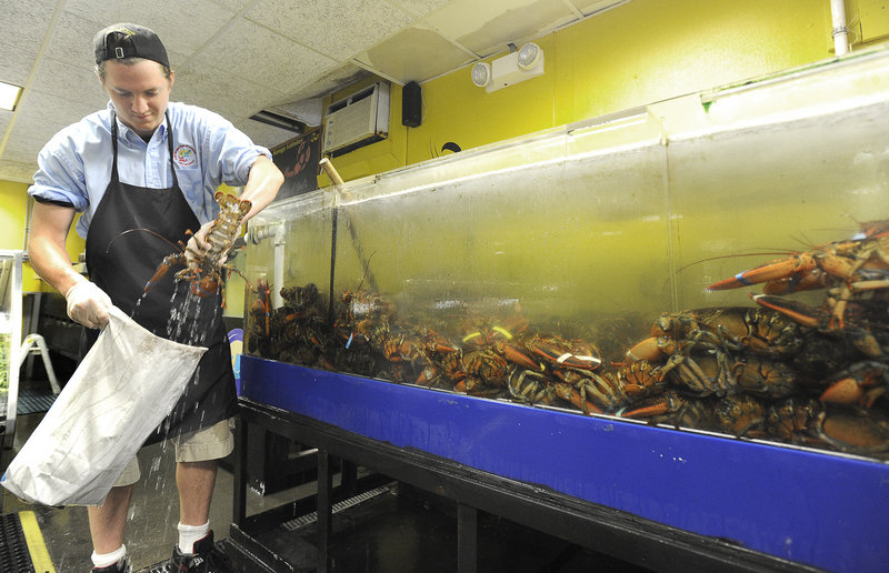 """Jack Burke selects lobsters for a customer at Free Range Fish & Lobster in Portland last week. While dealers and retailers add to lobster prices, """"there's always wiggle room if you've got product you want to move,"""" says one industry expert."""