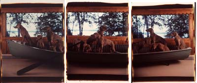 """The large-scale Polaroid """"Crossing"""" from William Wegman's """"Hello Nature"""" at the Bowdoin College Museum of Art."""