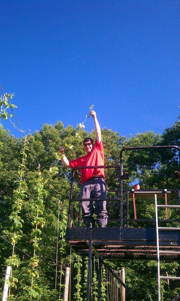 Jeff Therrien checks his plants' progress at Rock Island Hop Farm.