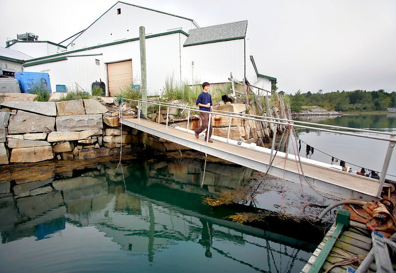 Kyle Murdock, president and CEO of Sea Hag Seafood, walks to the pump house on Long Cove in Tenants Harbor on Monday. Behind Murdock is the Sea Hag Seafood processing plant.