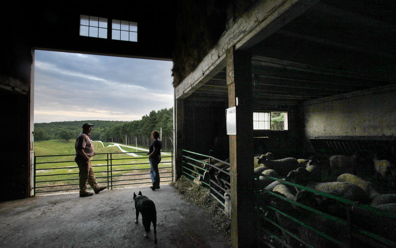 Phil and Lisa Webster survey the scene from the barn at Collyer Brook Farm in New Gloucester, where they lease 650 acres to pasture their sheep. The Websters expect to eventually have 2,500 sheep grazing on the land.
