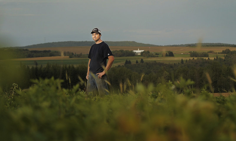 Matt Porter of Presque Isle stands in one of his potato fields. Porter says many of his potatoes are undersized because of lack of rain for the last two months.