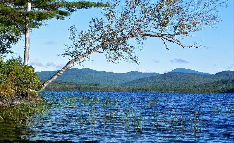 Looking north from the western shoreline of Wilson Pond, a canoeist can see the conical profile of Mount Blue. The pond teems with wildlife, especially birds, including kingfishers, mergansers and ducks.