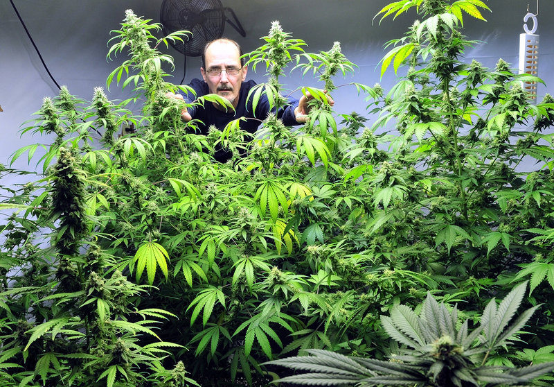 """Don LaRouche stands inside the medical marijuana """"budding room"""" at his home in Madison. LaRouche is one of six subsidized housing tenants who have been told to stop growing or using pot in their homes or they may lose aid."""