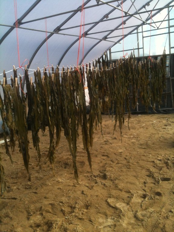 VitaminSea's products include a line of dried sea vegetables, which retail for $7.