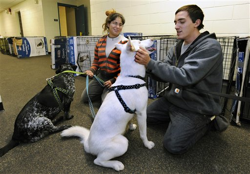 FILE - In this Oct., 28, 2012, file photo, Sarah Korman and Michael Cunba, who evacuated their home in Long Beach, N.Y., bring their dogs Jade, left, and Ava to a pet shelter at Mitchell Park's Field House, run by the Nassau County Office of Emergency Management and Pet Safe Coalition in Uniondale, N.Y. The storm drove New York and New Jersey residents from their homes, destroyed belongings and forced them to find shelter for themselves - and for their pets, said owners, who recounted tales of a dog swimming through flooded streets and extra food left behind for a tarantula no one was willing to take in. (AP Photo/Kathy Kmonicek, File)
