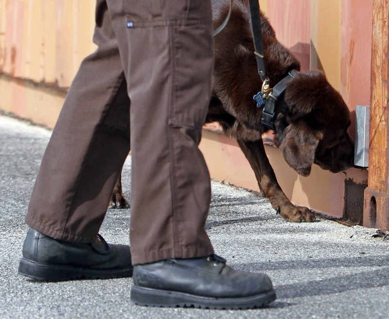 A detection of drugs by the Miami-Dade police dog Franky, above, is at the center of a case before the U.S. Supreme Court on the legality of outside-the-home searches.