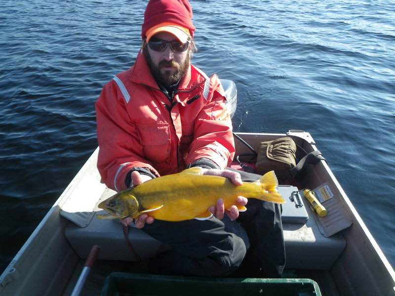 An Arctic char awaits stocking in a Maine pond, but fisheries experts would first like to rid the waterway of smelt.