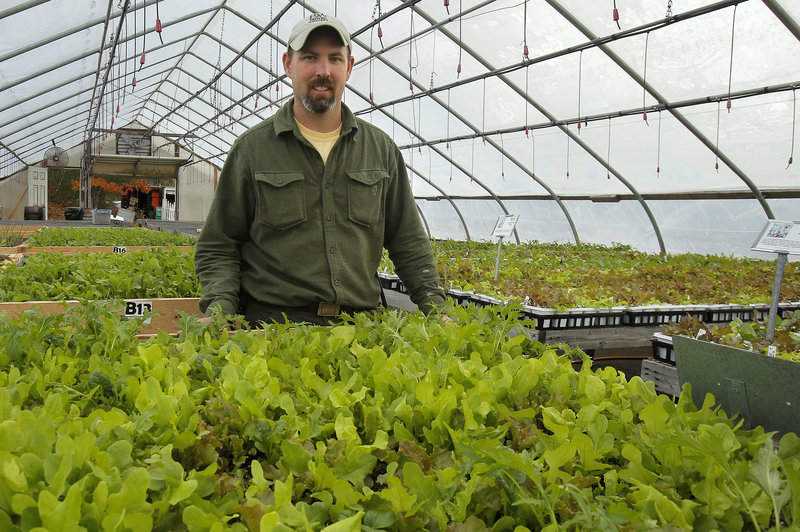 """Joe Viscano has a greenhouse full of greens that he will sell in his store, at the farmers market and to restaurants. """"It's kind of a science project,"""" he said. """"It seemed like there was a demand for something like this."""""""