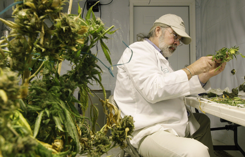 Jake Dimmock, co-owner of the Northwest Patient Resource Center medical marijuana dispensary in Washington, prepares medical marijuana for distribution to patients in Seattle. Medical marijuana advocates in Maine are promoting new legislation that would deregulate the state's program further by allowing doctors to certify patients for any medical condition.
