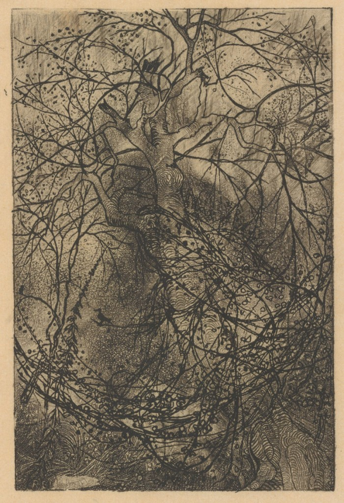 """""""Branches,"""" ca. 1880 etching by French artist Rodolphe Bresdin."""