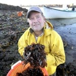 "VitaminSea co-owner Tom Roth collects dulse, a type of edible seaweed, during low tide on Casco Bay. Roth says his company comes up with ideas for new products by ""messing around"" and seeing how things taste."