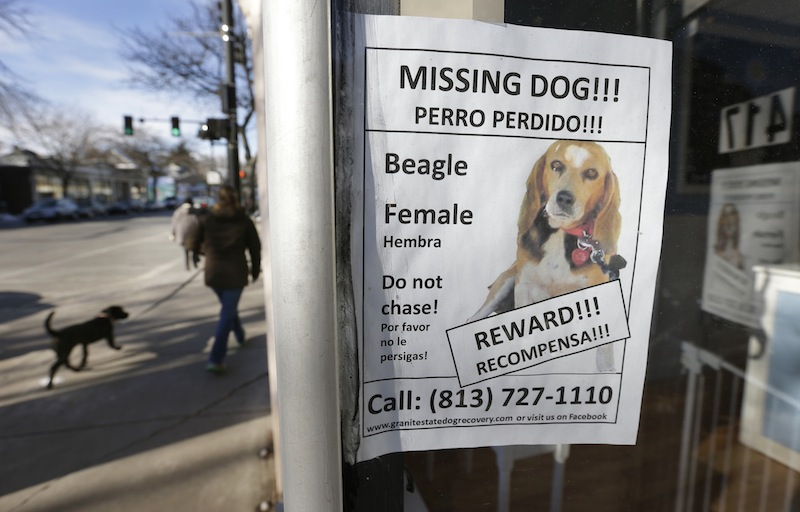A poster for a missing dog is attached to a shop window, in Brookline, Mass., Thursday, Jan. 3, 2013. The missing dog, a beagle named Tessa, which belongs to author Dennis Lehane, went missing Christmas Eve 2012. (AP Photo/Steven Senne)
