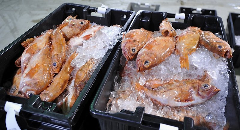 Two-thirds of the way through the 2012 fishing year, which ends April 30, New England fishermen have caught less than half their allotments of 14 species of groundfish.