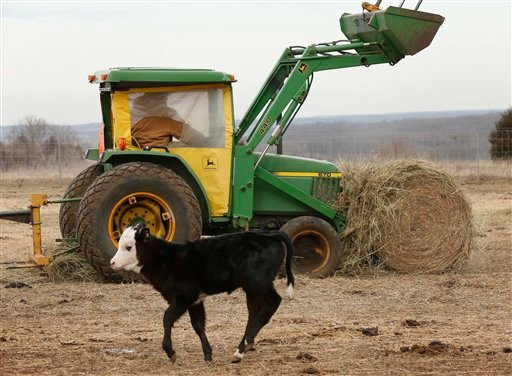 Randy Cree picks up a bale of hay while feeding cattle on his farm near Big Springs, Kan., earlier this month. Years of drought are reshaping the U.S. beef industry with feedlots and a major meatpacking plant closing because there are too few cattle left in the United States to support them.