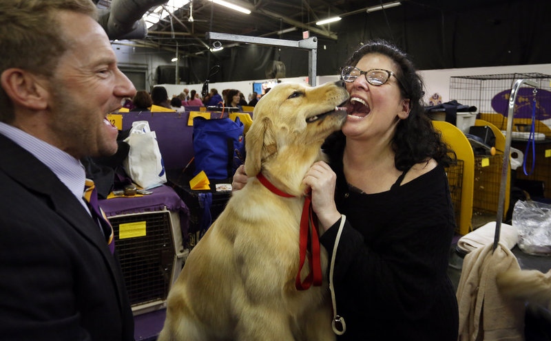 Jill Simmons of Falmouth, at right, celebrates after reuniting with her golden retriever Lush, center, who took part in the best of breed competition at the 137th annual Westminster Kennel Club Dog Show at Pier 94 in New York City, New York, Tuesday, February 12, 2013. At left is Lush's handler Graeme Burdon.