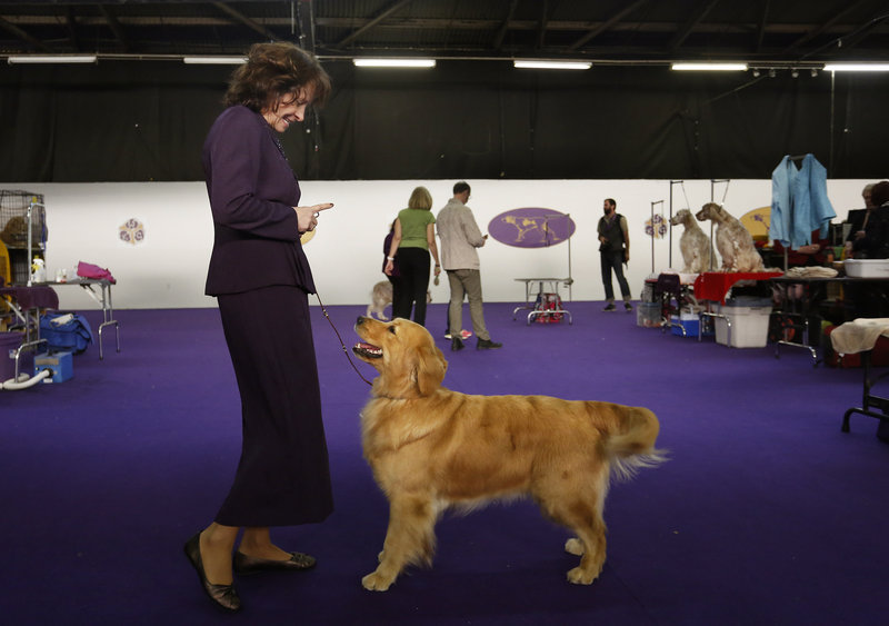 Maryterese Russo of Lebanon plays with her golden retriever Tassel Tuesday, Februrary 12, 2013, in the benching area of the 137th annual Westminster Kennel Club Dog Show at Pier 94 in New York City, New York, before walking to the best in breed competition.