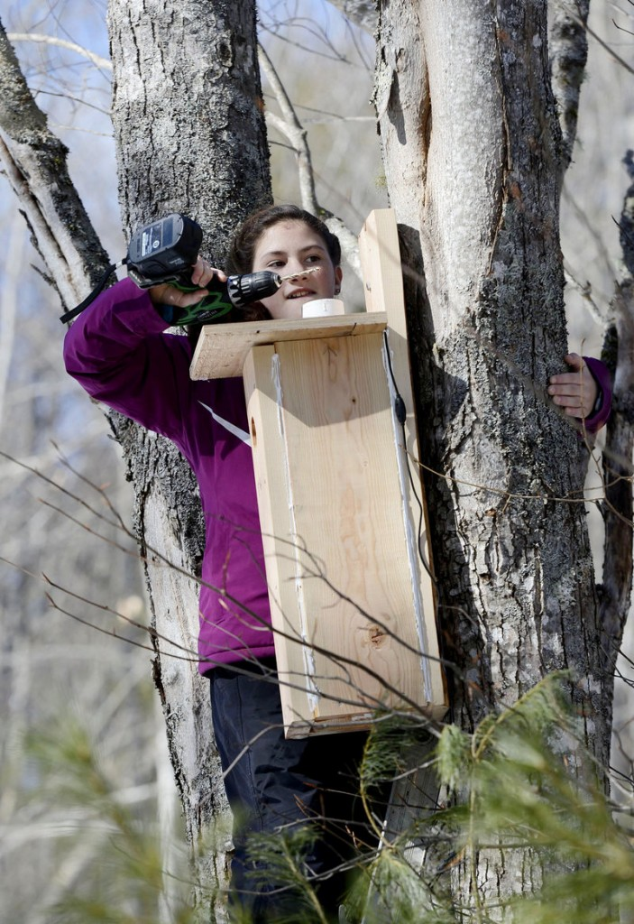 Emma Hall, 11, drills a hole so she can hang a nesting box for northern flickers, a medium-sized member of the woodpecker family.