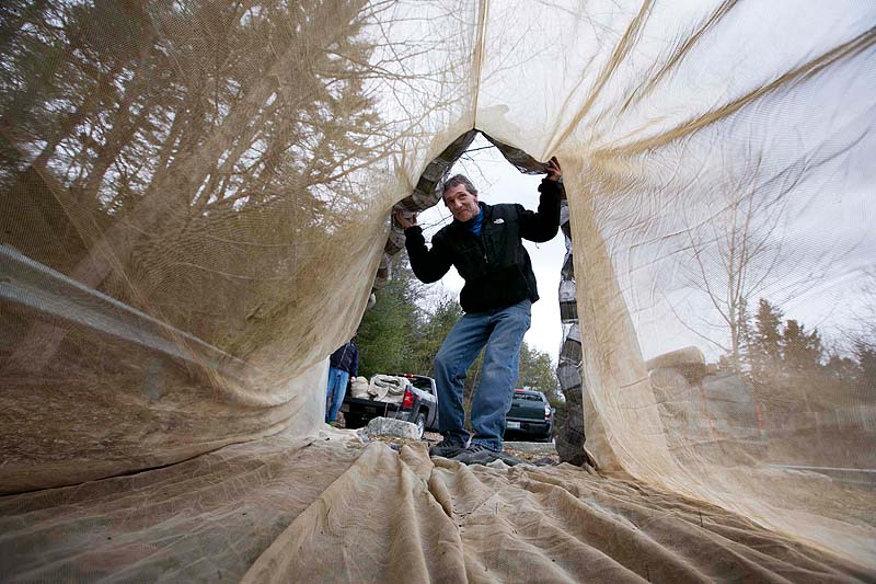 Eel fisherman Mike Murphy, of Cundy's Harbor inspects a 30-foot-long fyke net, in Falmouth. Last year, glass-eel fishermen at times got more than $2,500 a pound for their catch. Murphy and his fishing partners intend to spend the next eight days in a parking lot next to the Presumpscot River in order to hold their fishing spot until the elver season opens on March 22.