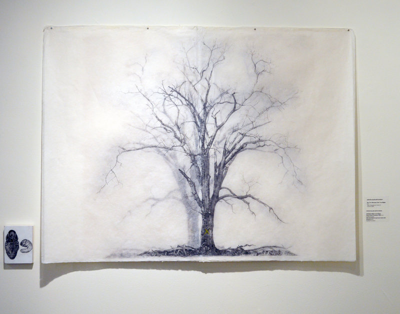 """A drawing from Judy Allen-Efstathiou's """"Tree Museum"""" series."""
