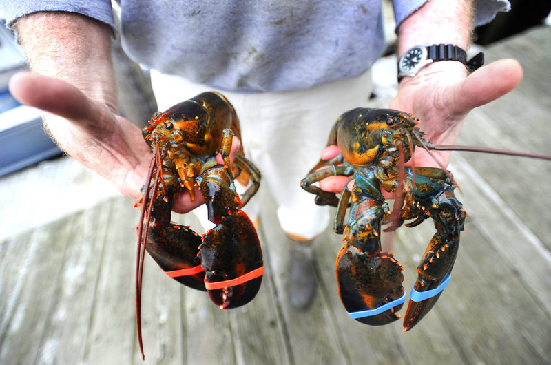 The Maine Lobstermen's Association didn't speak for the majority of fishermen when it agreed to support a new surcharge on licenses, a lobsterman says. The new fee will be used to pay for increased state efforts to market the crustacean.